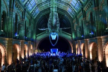 Natural History Museum interior